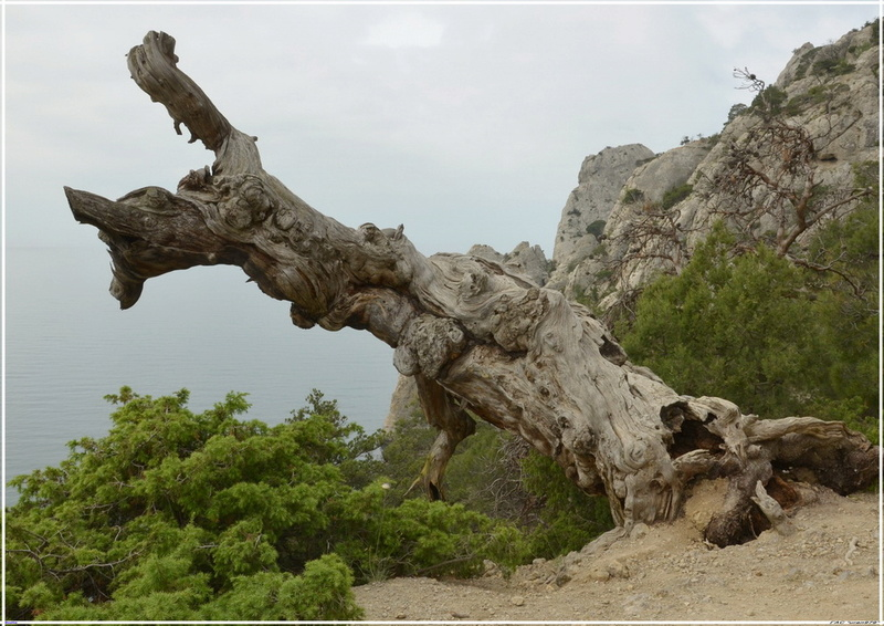 Деревья на скалах 1_ed3114
