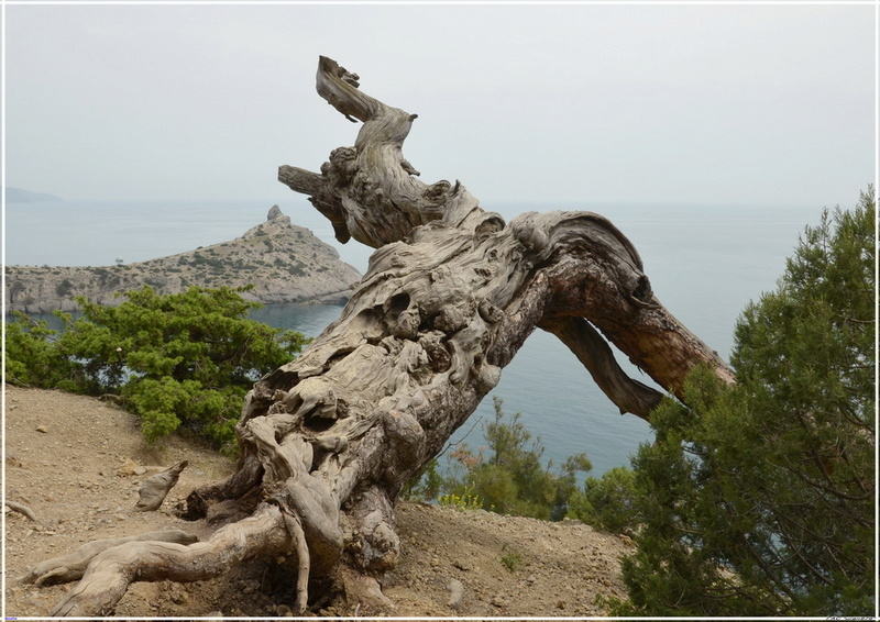 Деревья на скалах 1_ed3115