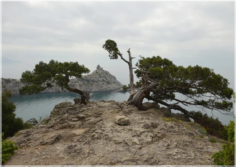 Деревья на скалах 1_ed3116