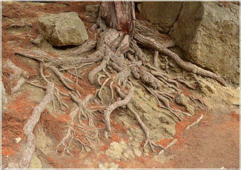 Деревья на скалах - Страница 2 1_ed3117
