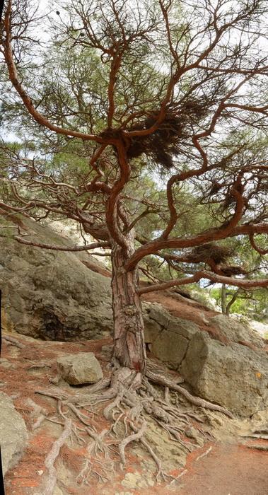 Деревья на скалах - Страница 2 1_ed3118