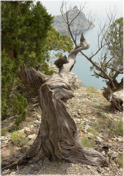 Деревья на скалах - Страница 2 1_ed3119