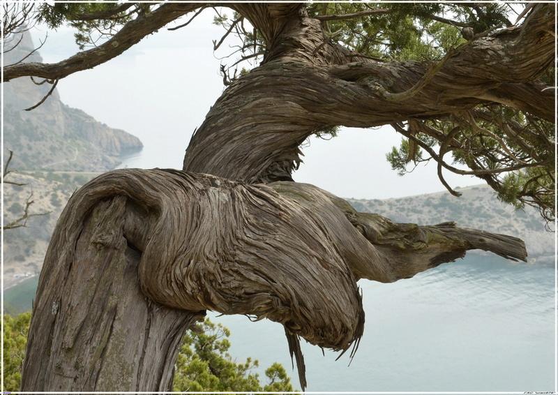 Деревья на скалах - Страница 2 1_ed3210