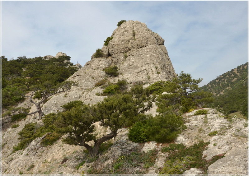 Деревья на скалах - Страница 2 1_ed3214