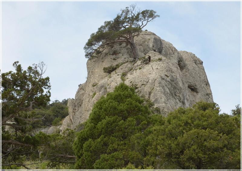 Деревья на скалах - Страница 2 1_ed3217