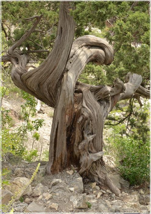 Деревья на скалах - Страница 2 1_ed3311