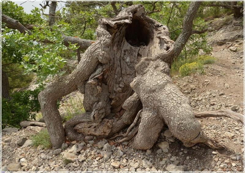 Деревья на скалах - Страница 2 1_ed3312