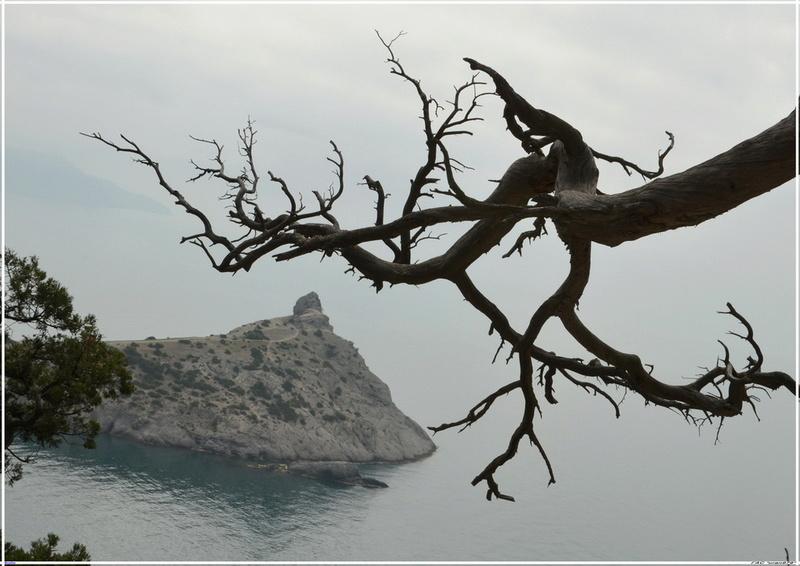 Деревья на скалах - Страница 2 1_ed3313