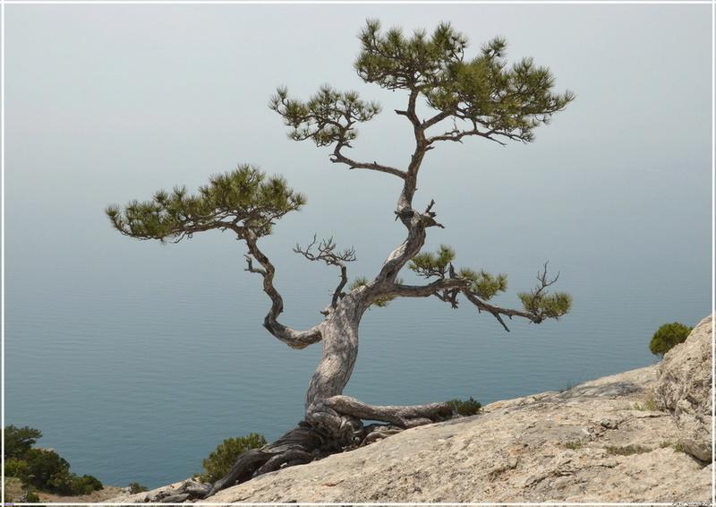 Деревья на скалах - Страница 4 1_ed3610