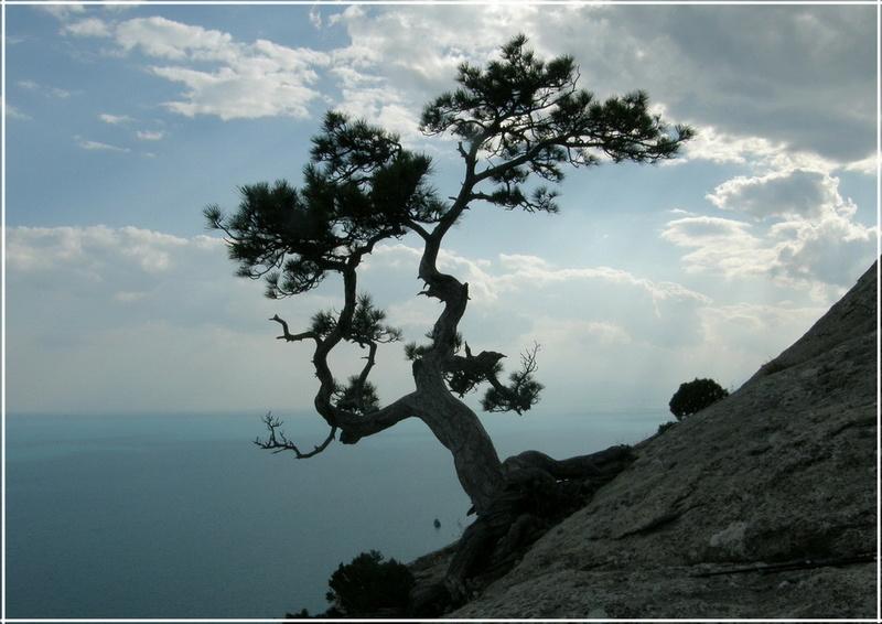 Деревья на скалах - Страница 4 1_ed3611