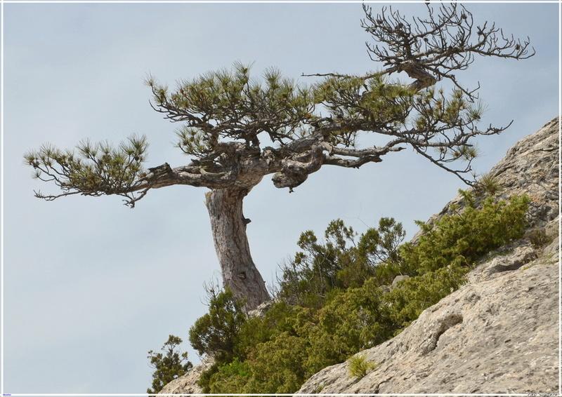 Деревья на скалах - Страница 4 1_ed3612