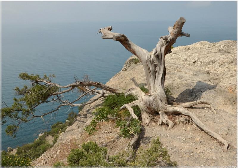 Деревья на скалах - Страница 4 1_ed3613