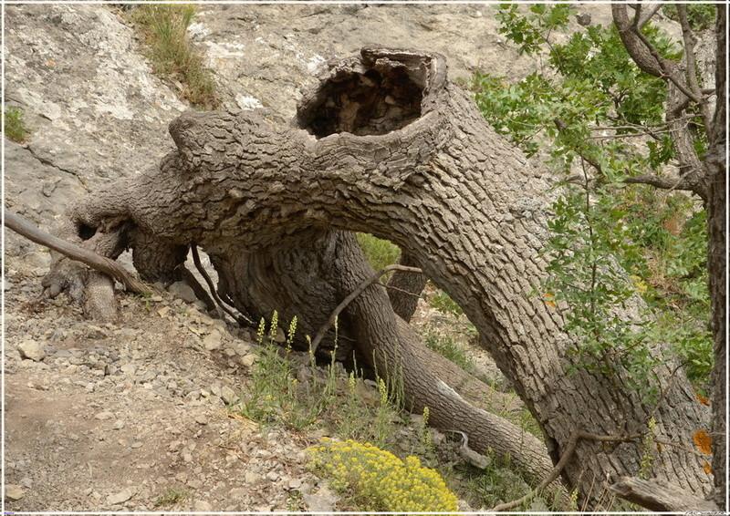 Деревья на скалах - Страница 5 1_ed3711