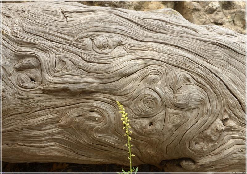 Деревья на скалах - Страница 5 1_ed3714