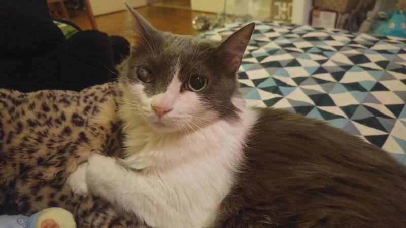 Les chats à adopter, adaptés à la vie en appartement Isis212