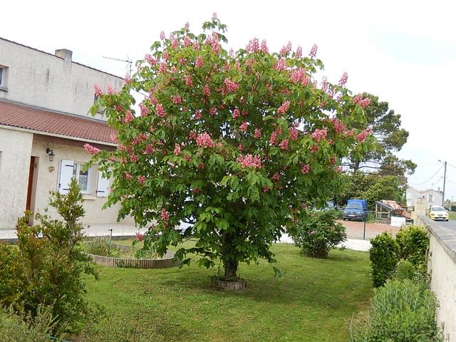 """Des arbres """"géants""""dans les petits jardins? Dscn0020"""