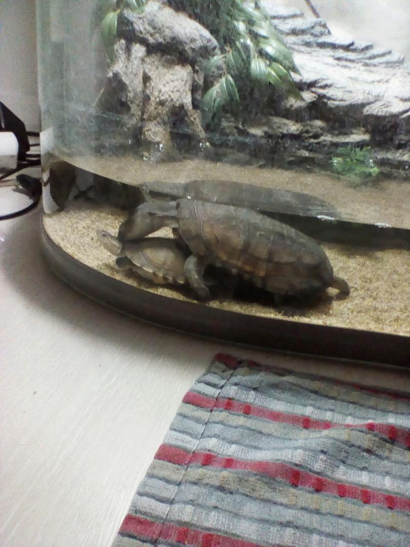 Mes tortues font des bébés ? Img_2023