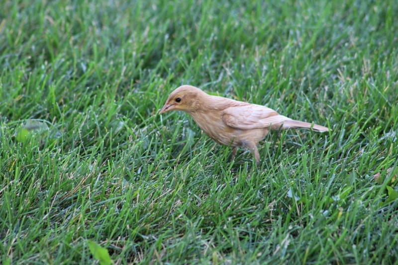 Mystérieux Oiseau Img_9911