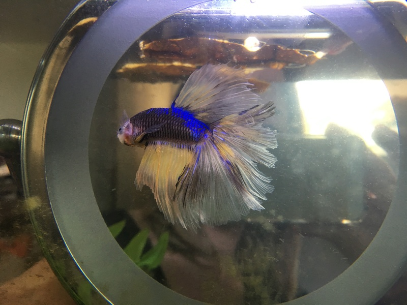 Identifier type betta Img_0410