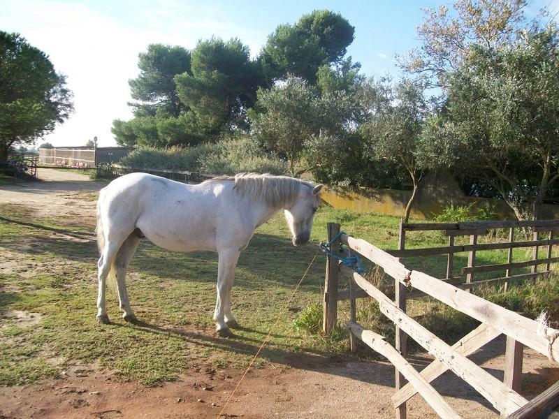Vend Cheval croisé camargue 100_0310