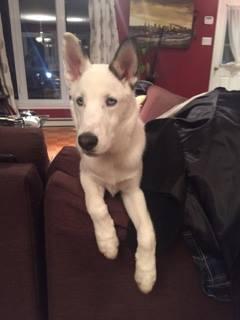 HELP : Mon chien à un problème aux pattes arrières 15871110