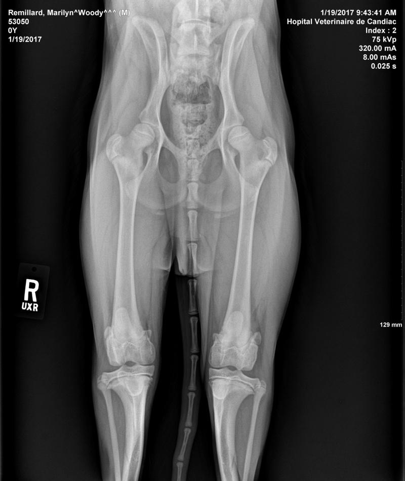 HELP : Mon chien à un problème aux pattes arrières Remill11