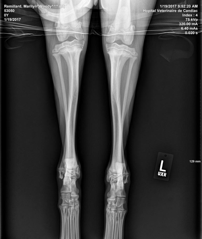 HELP : Mon chien à un problème aux pattes arrières Remill12
