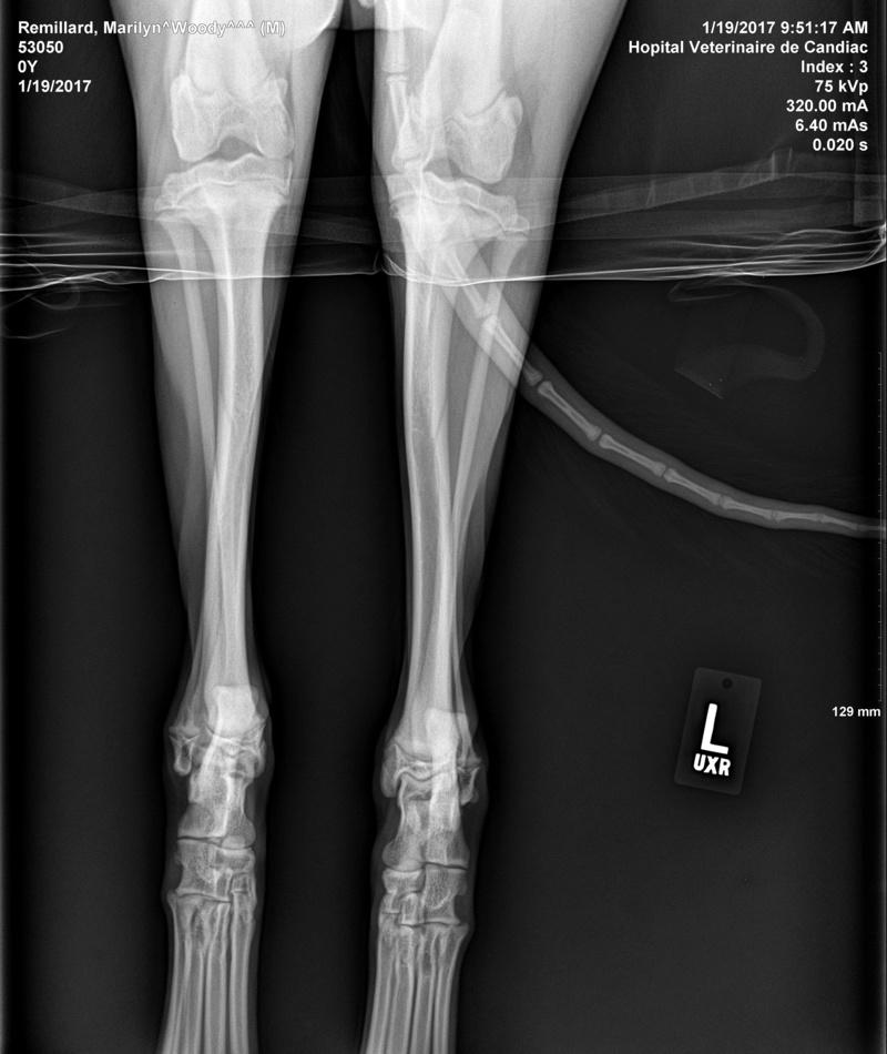 HELP : Mon chien à un problème aux pattes arrières Remill13