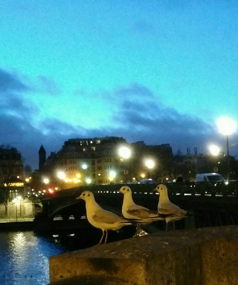 les mouettes de la Seine Img_2012