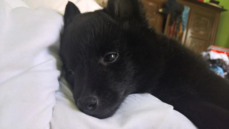Les tribulations d'un petit loup noir. Wp_20122
