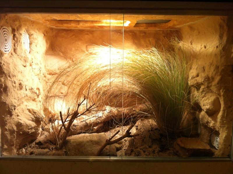 Construction  d'un terrarium pour mon gecko Img_1810