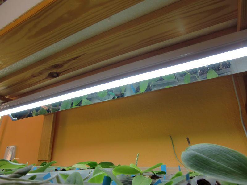 Orchideen und Kunstlicht/Zusatzlicht Li510