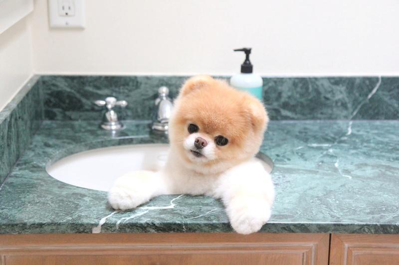 Медвежонок в раковине