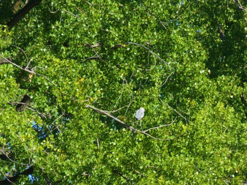 Devinez qui est dans l'arbre Img_5010