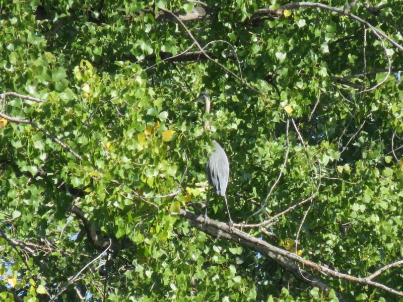 Devinez qui est dans l'arbre Img_5011