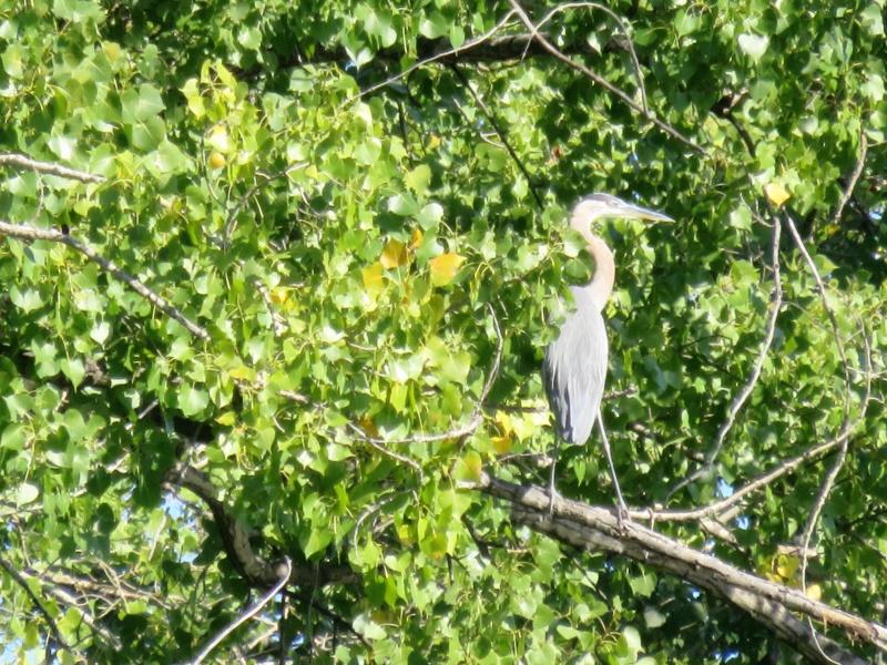 Devinez qui est dans l'arbre Img_5013