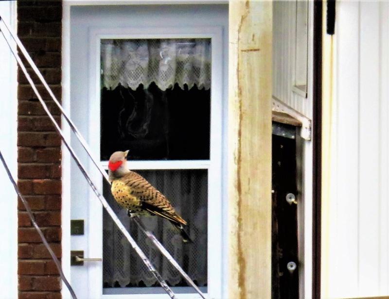 Pic flamboyant devant chez moi, j'ai eu le temps de prendre une seule photo! Img_5518