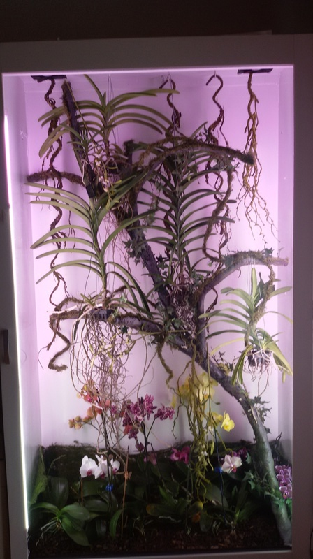 Bilder meines Orchidarium 20170221