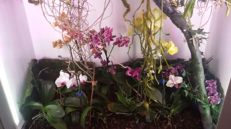 Bilder meines Orchidarium 20170222