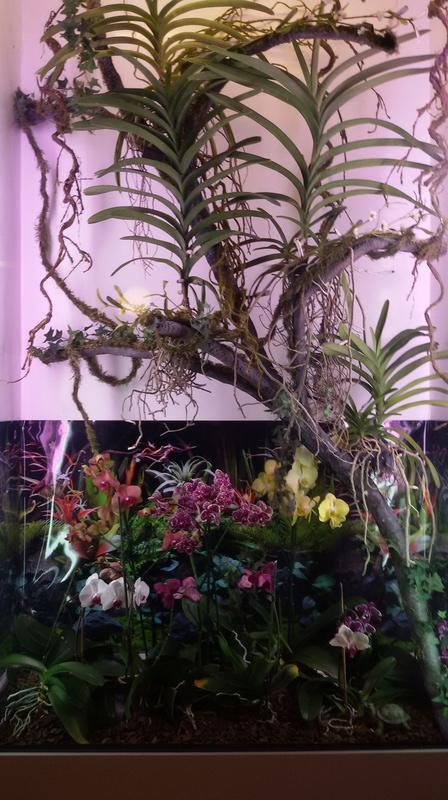 Bilder meines Orchidarium 20170223