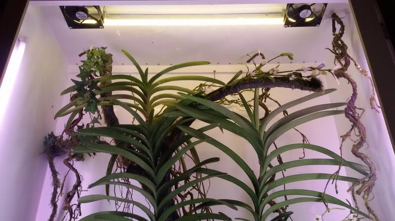 Bilder meines Orchidarium 20170224