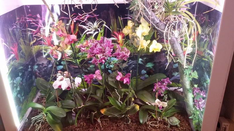 Bilder meines Orchidarium 20170225