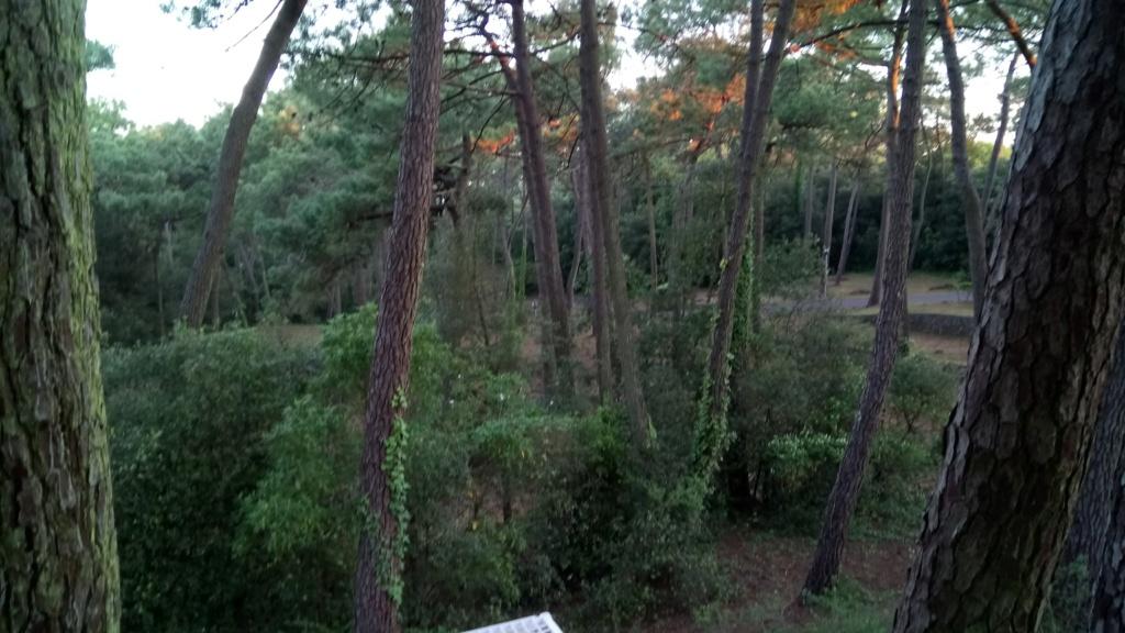 Camping sympa à me conseiller proche de Nantes Dsc_0018
