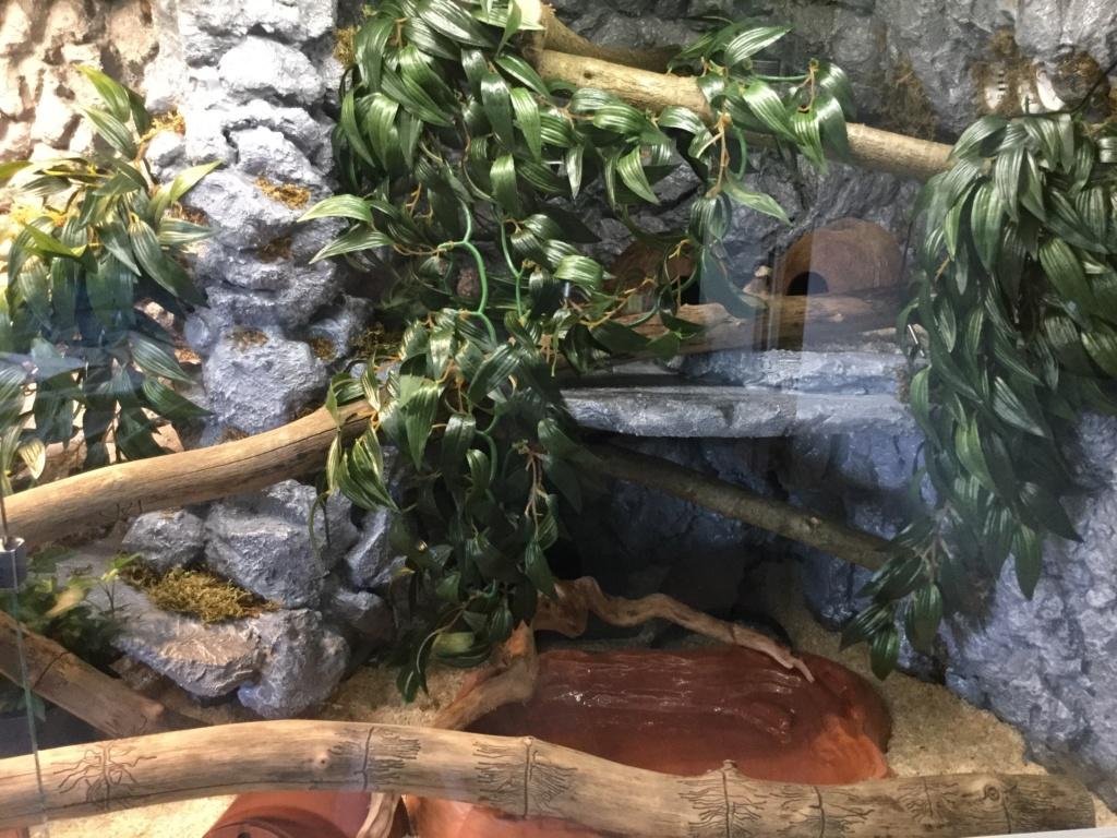Nouveau terrarium pantherophis guttatus  Image16