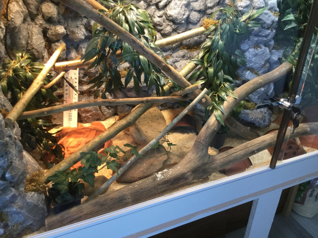 Nouveau terrarium pantherophis guttatus  Image17