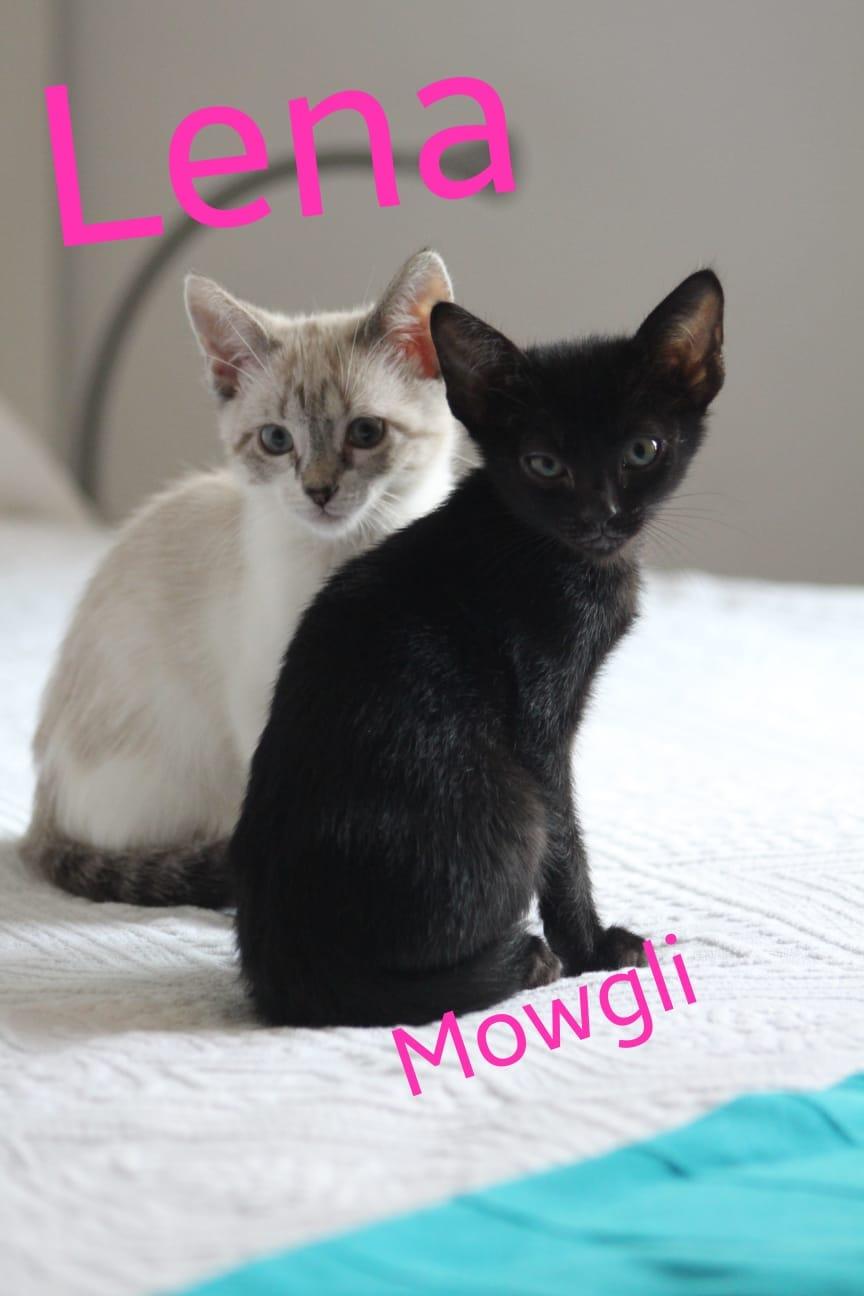 MOWGLI - NOIR - En FA en Suisse 16d03b10
