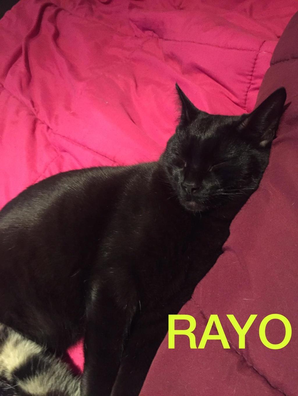 RAYO - NOIR - En FA en Suisse 4e277c10