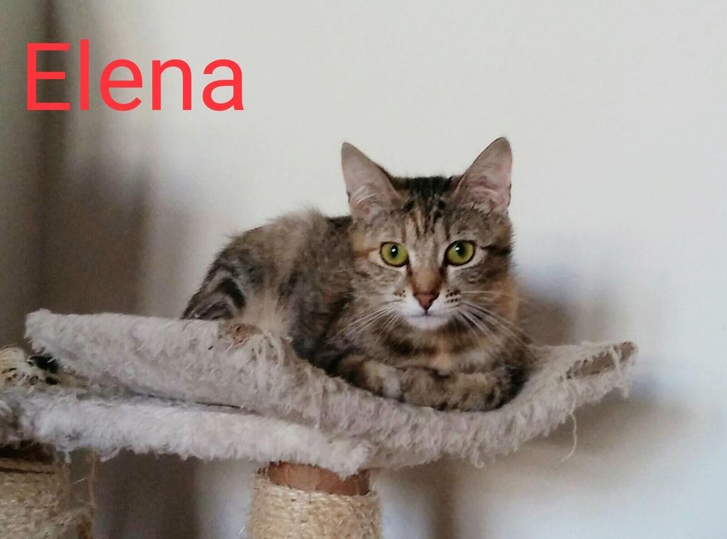 ELENA. Tigrée Marron   ( El Arca) 67bb5110