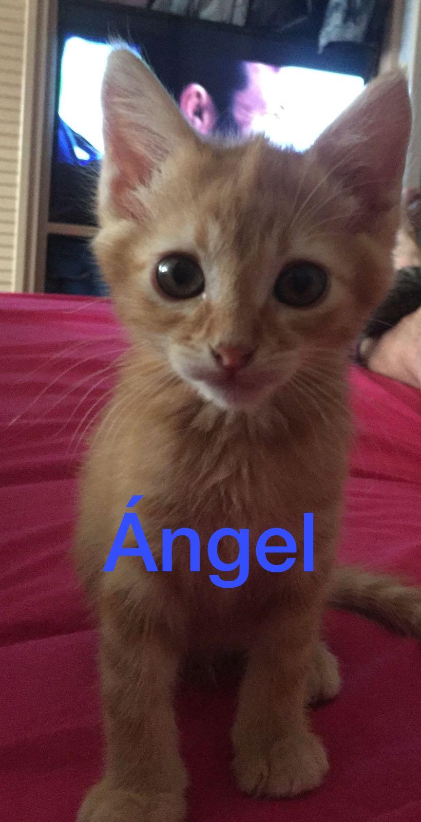 ANGEL - ROUX - EN FA EN SUISSE Angel10