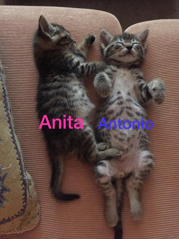 ANTONIO - TIGRE - EN FA EN SUISSE Anita_12